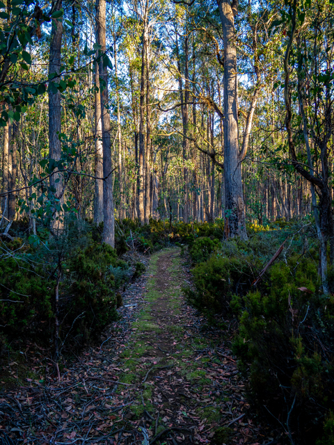 A short walk leads through the forest from the scultpures to the homestead