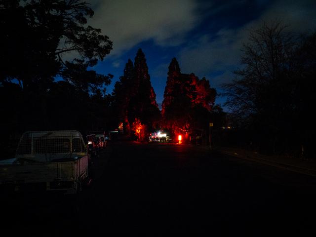 Dark Path at the Royal Tasmanian Botanical Gardens