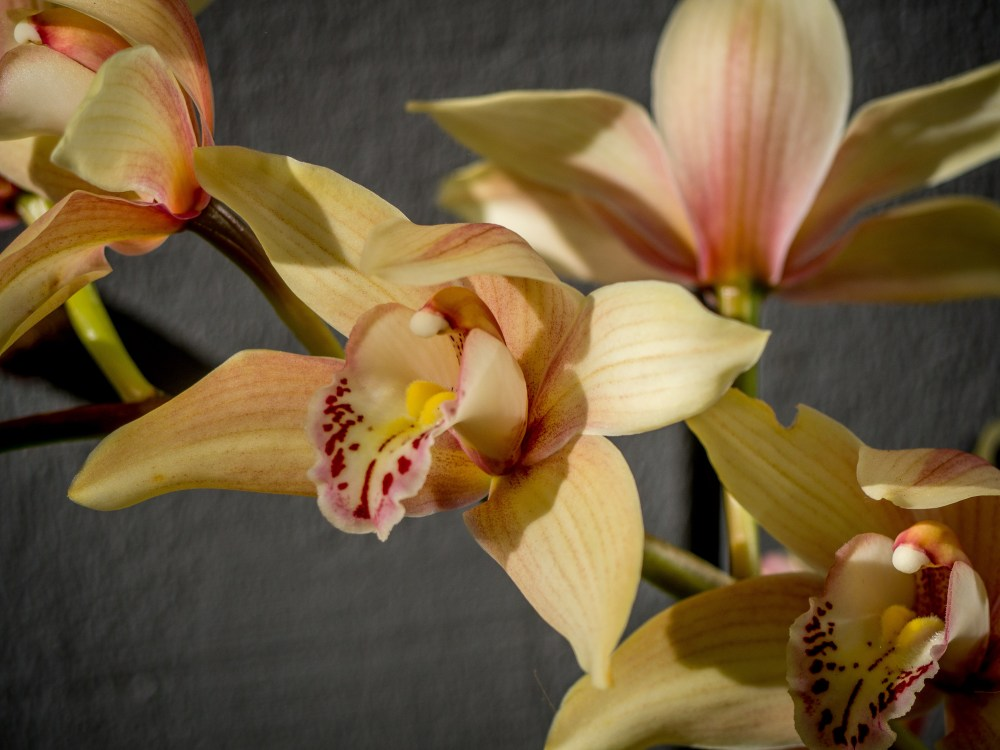 Orchids also put on a good display most Springs