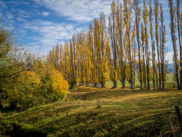 Autumn colour at Fentonbury in the Derwent Valley