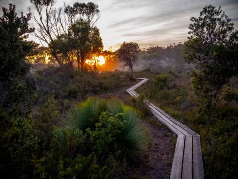 Sunrise over the camp at krakani lumi, Mount William National Park, Tasmania