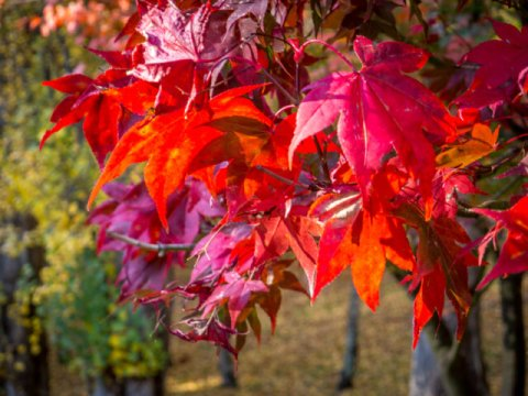 Autumn in Cascades Gardens, South Hobart