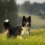 dog-3104806_960_720