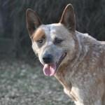 dog-906917_960_720