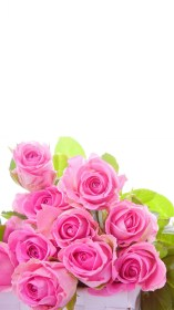 roses iphone flower pink flowers rose wallpapers 3d backgrounds wallpaperplay resolution abstract screensaver mi