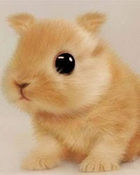 things adorable fat cutest lots bunnies bunny stuff ever kittens funny 2009 butt animals dog fluffy puppies