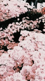 rose gold aesthetic background iphone wallpapers backgrounds pink flower pretty screen ipad visit reblog them save