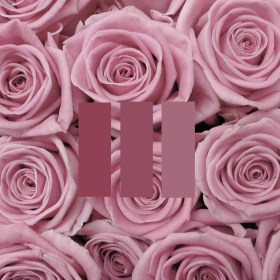 aesthetic rose pink picsart freetoedit collection sign