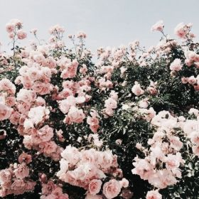 backgrounds aesthetic pink background flower flowers freetoedit sky sign liked users