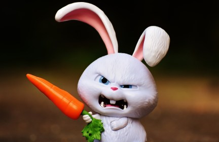 rabbit snowball pets evil cute funny character hare bad angry film mad toys carrot malware toy organ emotion macro sweetness