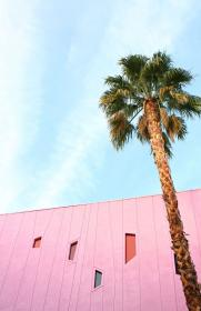 A colourful tour of Palm Springs Tree wallpaper iphone