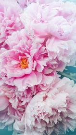 Pin by Rylee Clifton on iPhone Pink flowers wallpaper