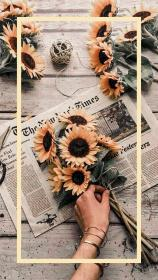 wallpapers aesthetic iphone phone desktop backgrounds sunflower yellow patterns