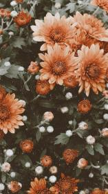 iphone backgrounds wallpapers phone background flowers floral trendy flores discover colorful screen