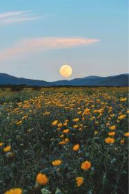 aesthetic landscape field flowers spring sunflowers yellow moon collage flower wallpapers backgrounds sky grunge nature inspiration travel iphone