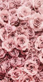 aesthetic phone iphone simple rose pink flower wallpapers pretty android instagram roses backgrounds flowers