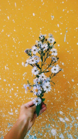 aesthetic flowers yellow flower background hd ari rachel hufflepuff pretty instagram saiki reader backgrounds wallpapers photography indie moodboard accidental lies