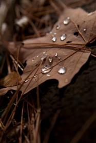 brown aesthetic leaves fall dark colors autumn shades cute nature beige cozy earth chocolate falling backgrounds cell ana rosa taupe