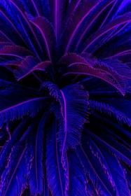 tree aesthetic neon palm purple iphone trees backgrounds