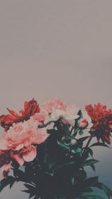 lockscreens iphone flower lock screen quotes backgrounds cool iphone5