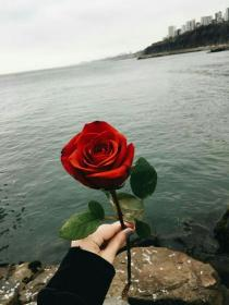 roses rose aesthetic flower backgrounds iphone flowers quotes mekka islam any nature splash colours wallpapers relation