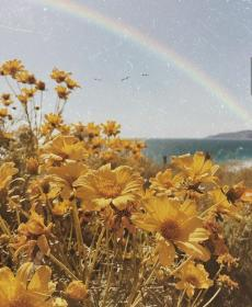 aesthetic yellow pastel flower rainbow flowers backgrounds spring rose