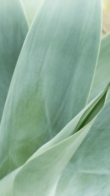 20 Sage Green Aesthetic Wallpapers Free Download Just