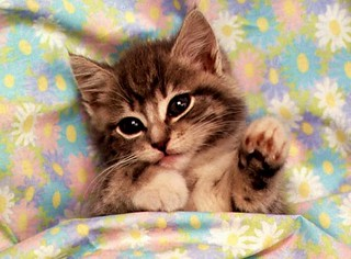 Kitten Cute Pics Of Cats - Novocom.top