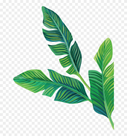 Aesthetic Clipart Transparent Green Green Aesthetic