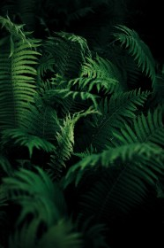 nature, Ferns, Plants Wallpapers HD / Desktop and Mobile