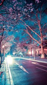 aesthetic japanese wallpapers iphone cherry night tree lovely backgrounds wallpaperaccess blooms