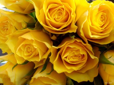 yellow aesthetic rose mac wallpapers quality backgrounds wallpaperaccess