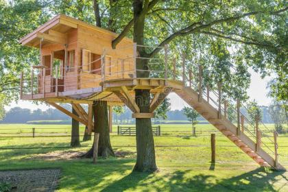 Wooden Tree House In Oak Tree With Grass Stock Photo