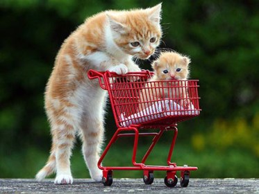 shopping cat kitten cart funny cutest ever things ferrari aww cats animals animal pets happened melt heart know kittens kitty