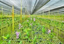 7 Dicas de Sucesso de Como Plantar Orquídeas