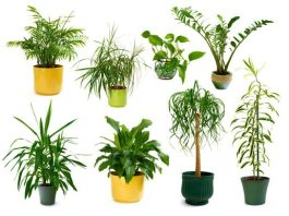 Flores e Plantas Ornamentais: Conheça!