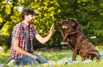 Curso Entendendo o Aprendizado Canino de Max Macedo: Seu Cão Mais Obediente