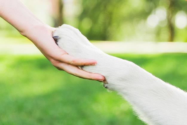 guia de adestramento de cães - passo a passo pdf