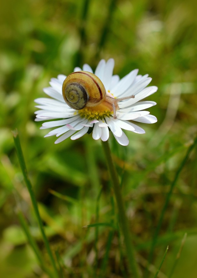 snail-498145