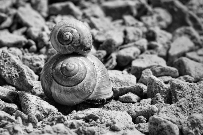 snails-700868