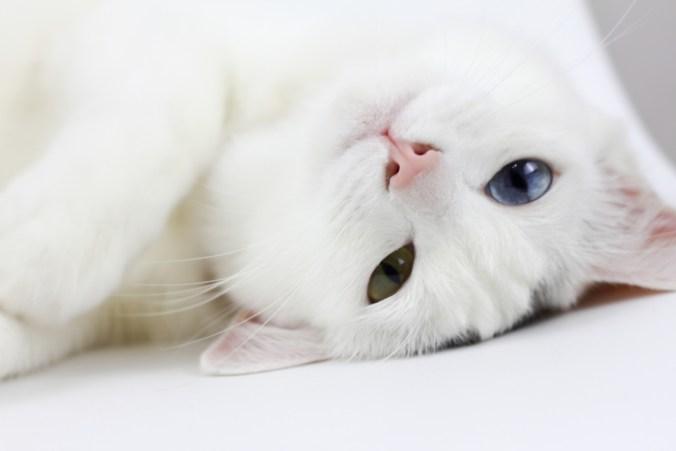 cat-1558970_1920