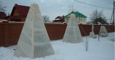 утеплить сад на зиму