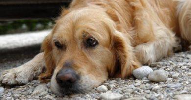 Собака спасла хозяина от неминуемой гибели