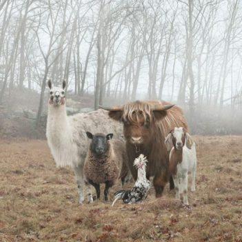 animals-about-to-drop-album-photos-58aeb2b30934d__700-419x420