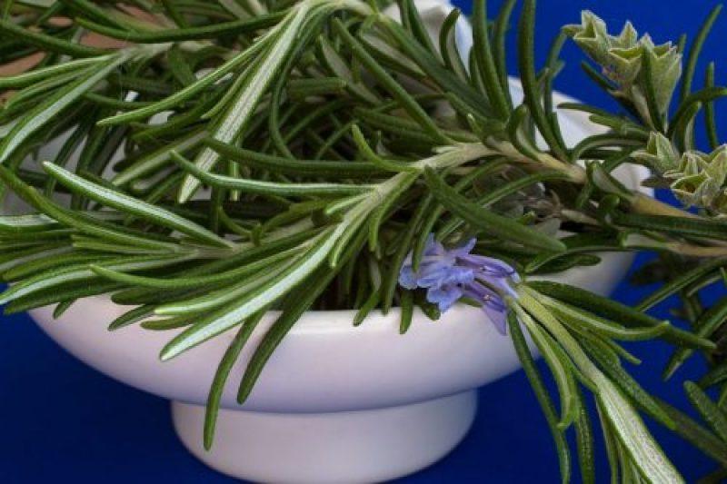 Ученые доказали, что это растение улучшает работу мозга и память на 75%! Но и это ещё не всё, смотрите!