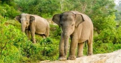 Животные, которые находятся на грани исчезновения