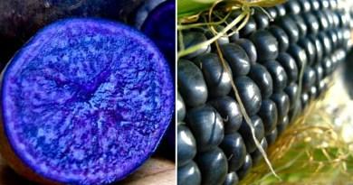 Удивительная селекция: красочный мир необычных овощей