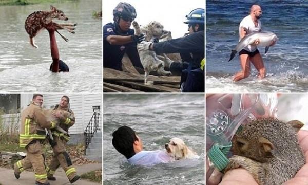 Люди, которые рисковали своей жизнью ради спасения животных