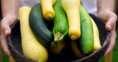 Чем кабачок отличается от цукини?