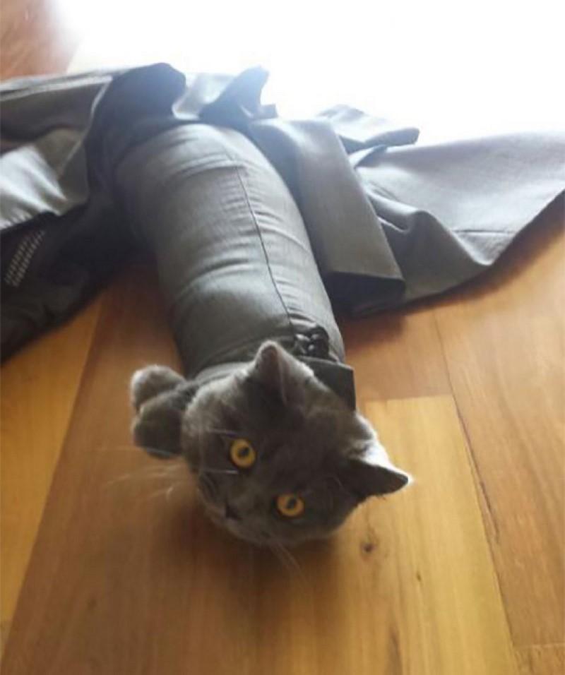 Смешные фото забавных и бестолковых котиков